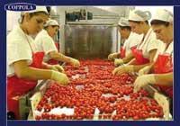 Conserve Pomodori Pelati