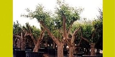 Viveros y silvicultura