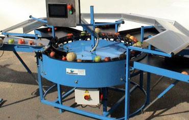 Calibreuse circulaire polyvalente de fruits - CALIBREX
