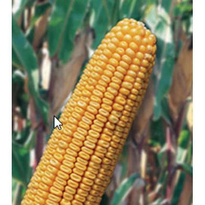 Semillas gran cultivo