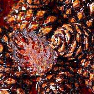 Pine cone jam with orange zest
