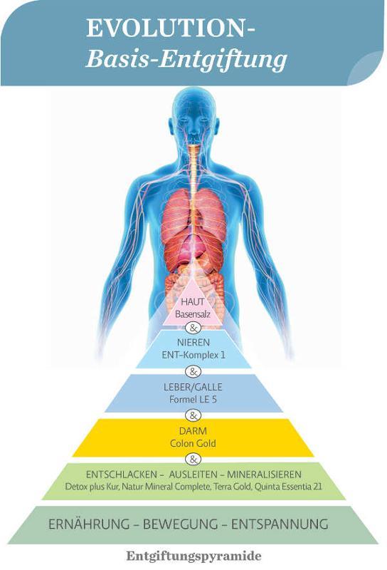 Basis-Entgiftung mit den EVOLUTION-Produkten - Entgiftungspyramide