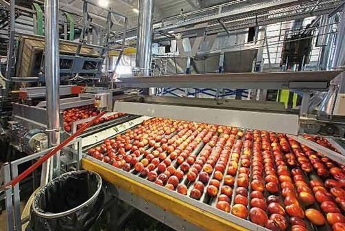 L'azienda Gullino - produzione frutta