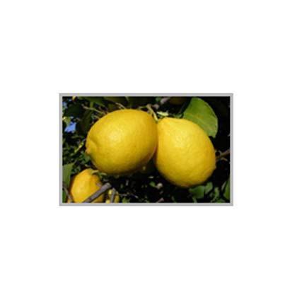 Limones. ALBAFRUITS