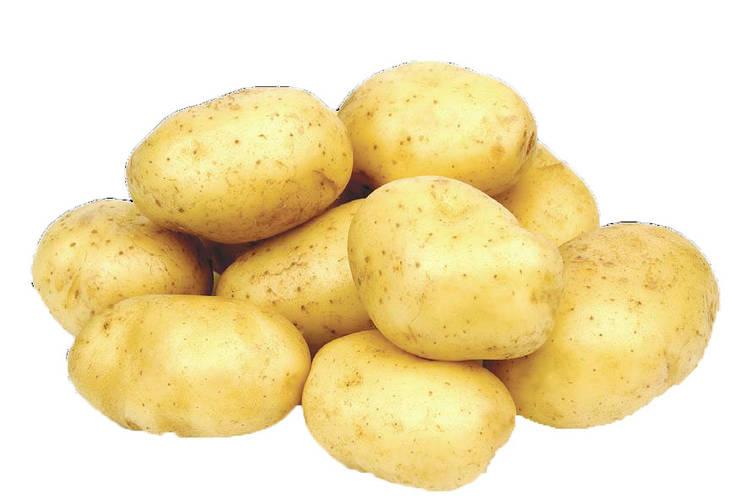 Large wholesale supply of potatoes from Russia
