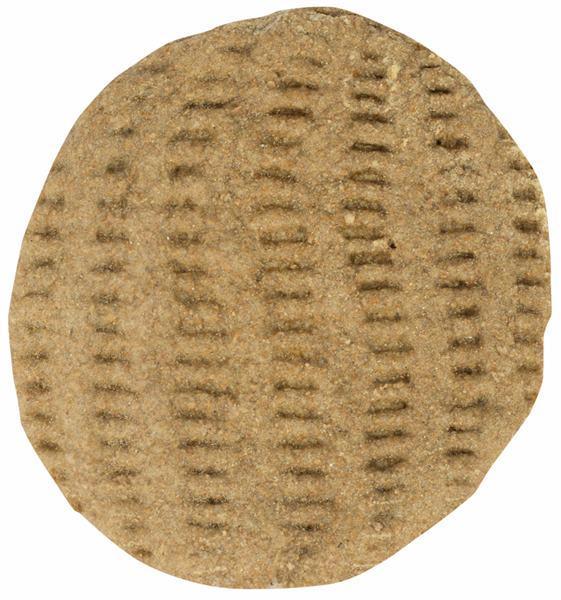 Wholewheat pita