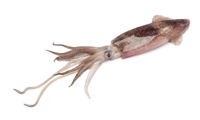 D.N.F. IMPORT EXPORT calamari