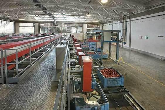 Produzione frutta