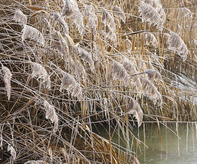 CONSORZIO DELLA BONIFICA BURANA irrigazioni