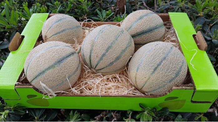 Melon export