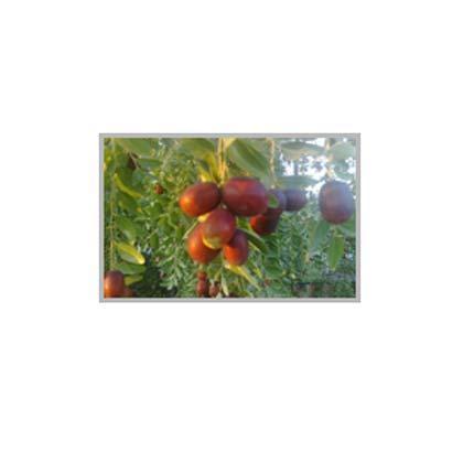 Frutas. ALBAFRUITS