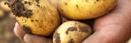 krompir belges