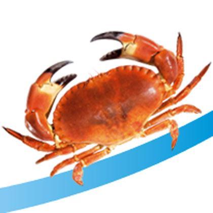 Marisco, crustáceos