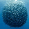 API SEAFOOD NETWORK