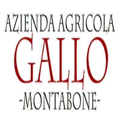 AZIENDA AGRICOLA GALLO SOCIETA' SEMPLICE AGRICOLA
