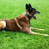 CAISSA DOG SECURITY