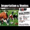 DBK IMPORT