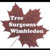 TREE SURGEONS WIMBLEDON