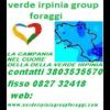 VERDE IRPINIA GROUP FORAGGI S.C.P.L.