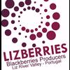 LIZBERRIES - PRODUTORES DE AMORAS E FRUTOS VERMELHOS