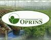 OPRINS PLANT