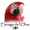 ELEVAGE DE PERROQUETS DE LOLIVE