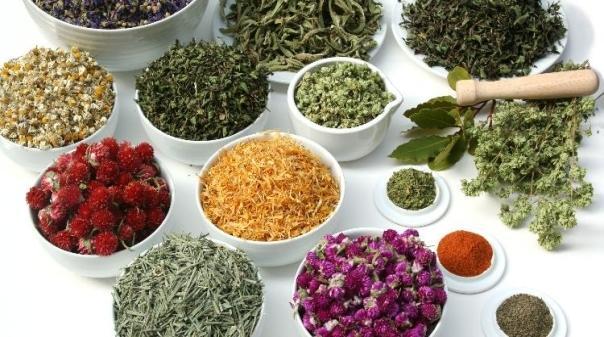 Plantas que podem substituir o paracetamol e o ibuprofeno