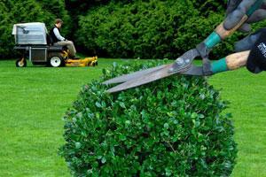 Entretien De Votre Jardin Et Espace Vert Clermont Ferrand Entretien
