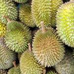 Durian / Kotzfrucht