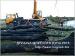 Морёный дуб натуральный, Bog Oak, 1998-2014 года добычи