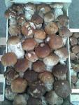Ciuperci din flora spontana