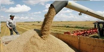 Wheat Flour Superior grade