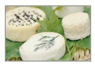 FROMAGE EXPORTATION