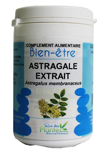Astragale - astragalus