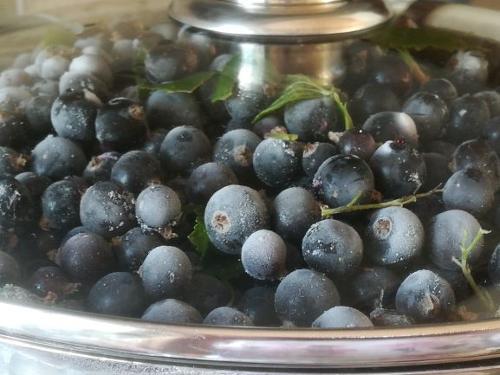 Bilberry juice (vaccinium myrtillus) pasteurized