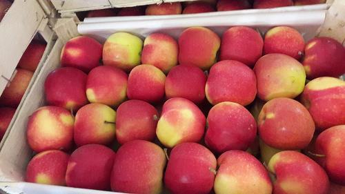 Apples Royal Gala