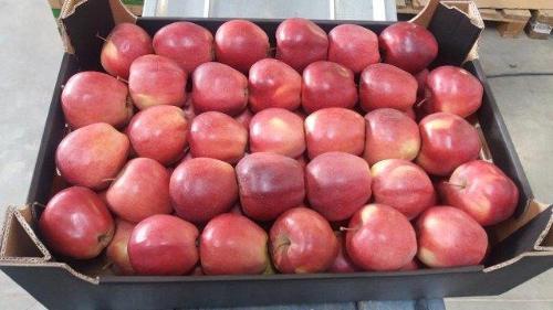 Jonagold de Costa apples
