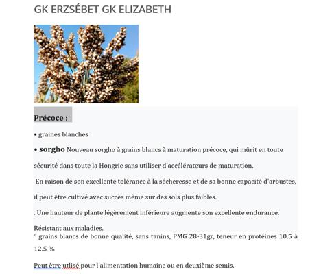 GK ELIZABETH