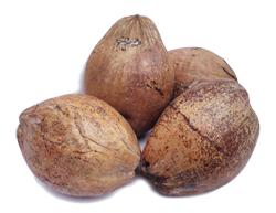 Kokosnuss / Kokosnüsse