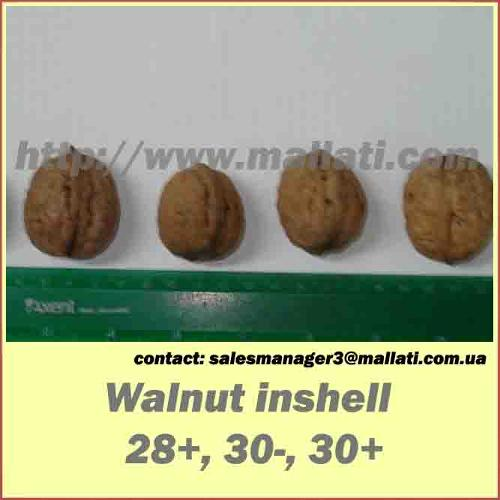 Walnut  in snshell 28+.30-. 30+
